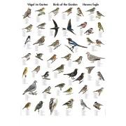Havens fugle (W)