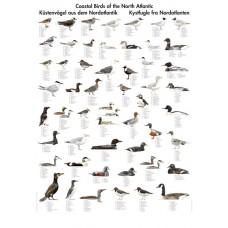 Kystfugle fra Nordatlanten (T)