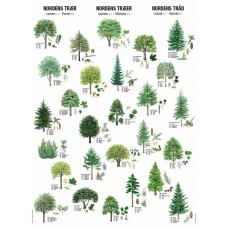 Nordens Træer