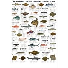 Saltvandsfisk (C)